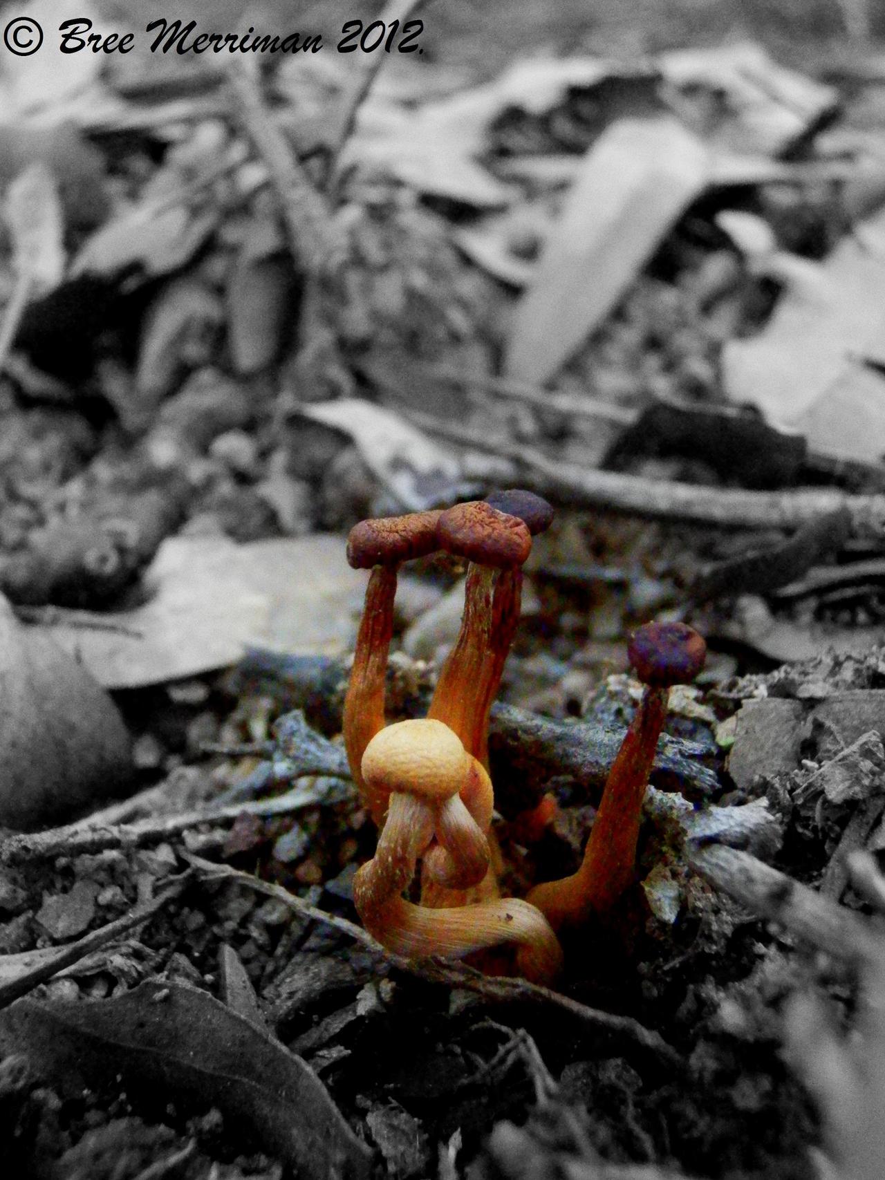 Fungus III by BreeSpawn
