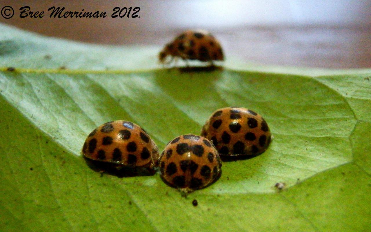 Bug Gossip by BreeSpawn