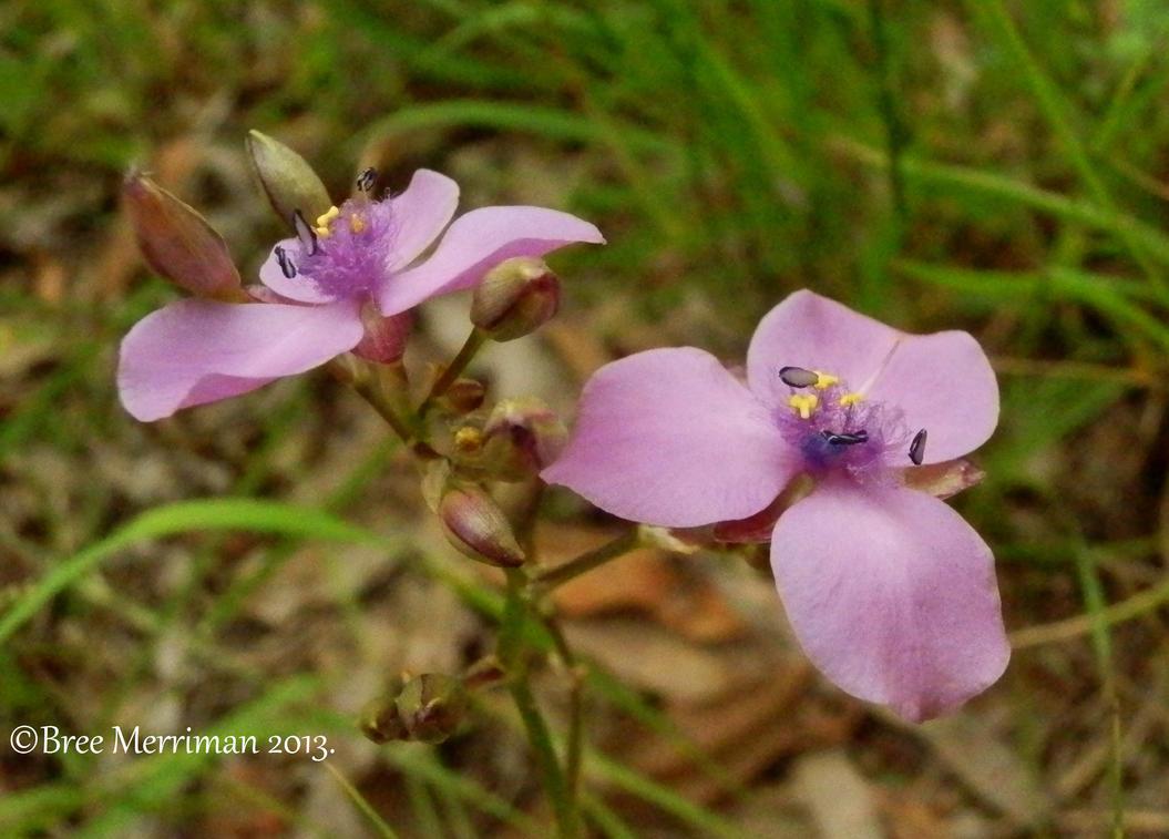 Native Flower II by BreeSpawn