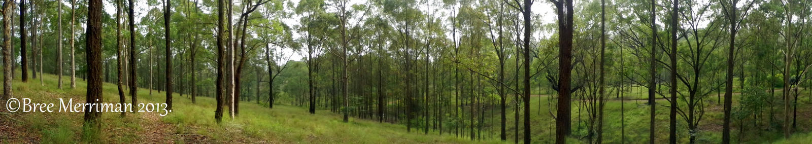 Forest Panorama II by BreeSpawn