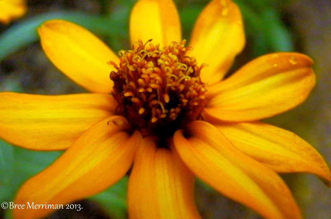 Yellow Flower by BreeSpawn