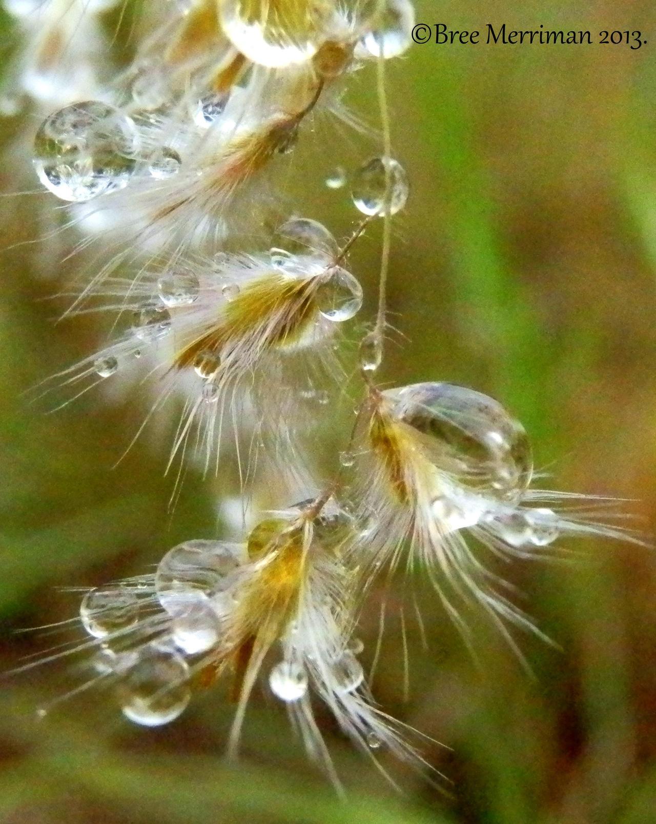 Dew Drops II by BreeSpawn
