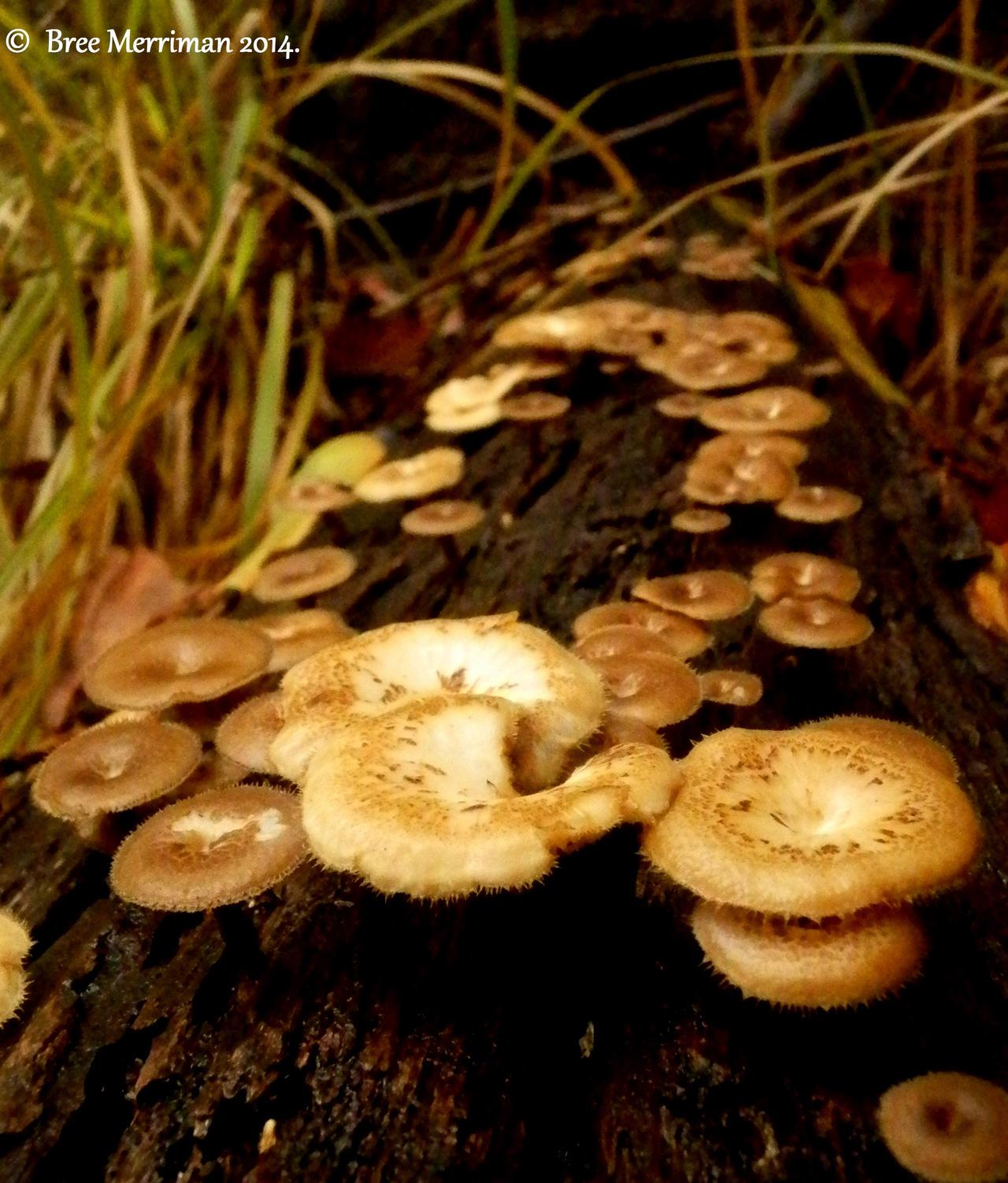 Fungi Collective I by BreeSpawn