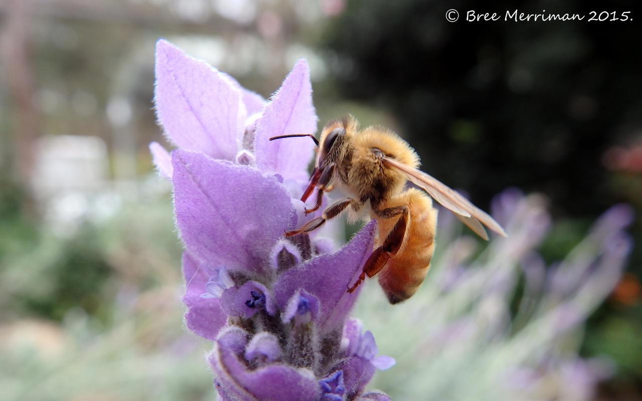Honey Bee by BreeSpawn