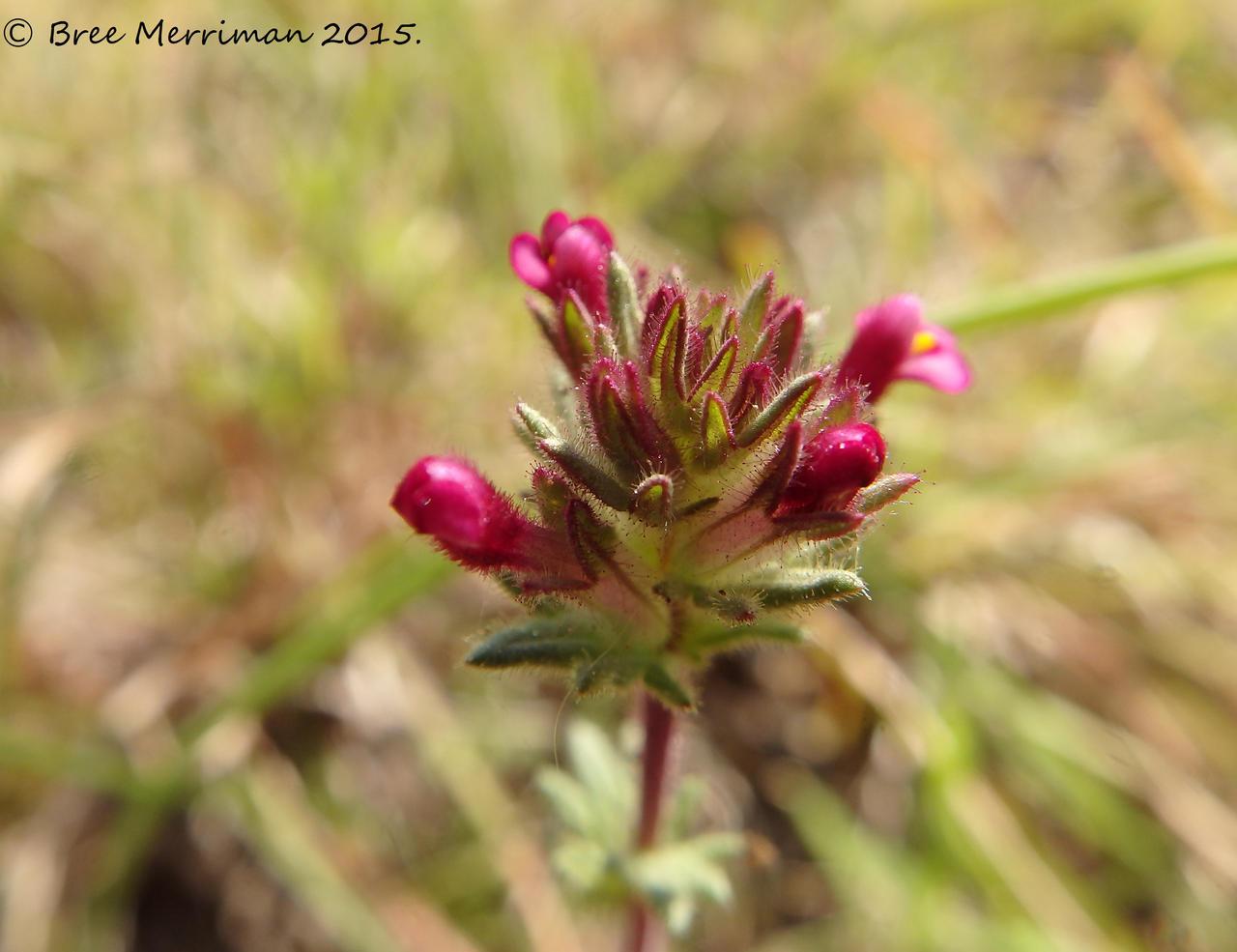 Wild Flower by BreeSpawn