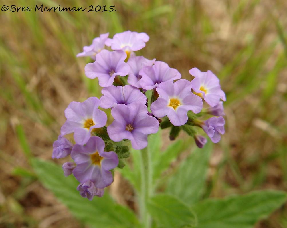 Macro Wild Flower by BreeSpawn