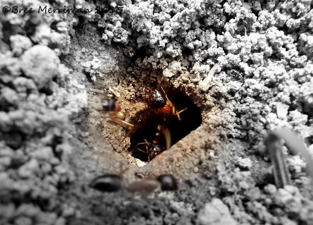 Sugar Ants by BreeSpawn