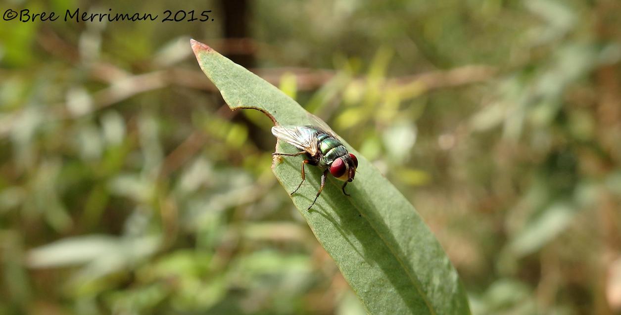 Fly Macro by BreeSpawn