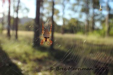 Weaver Spider