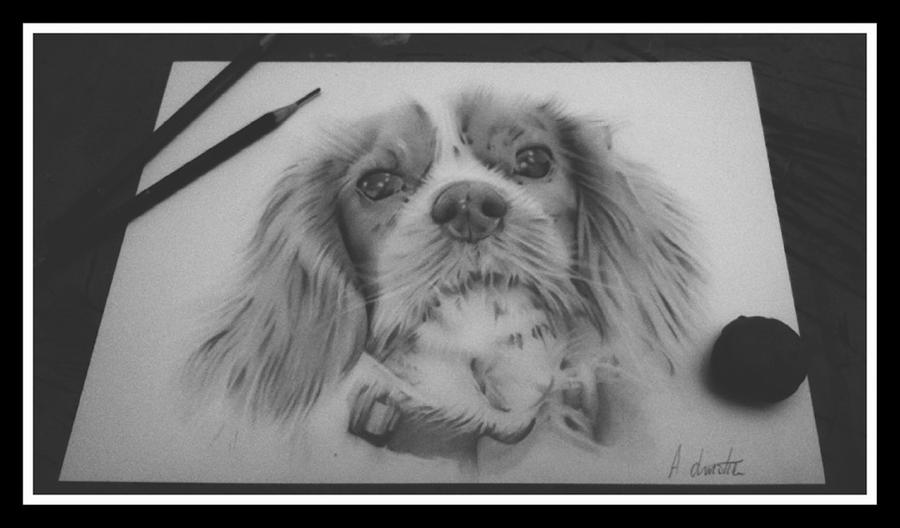 Dog portraits by Achristie