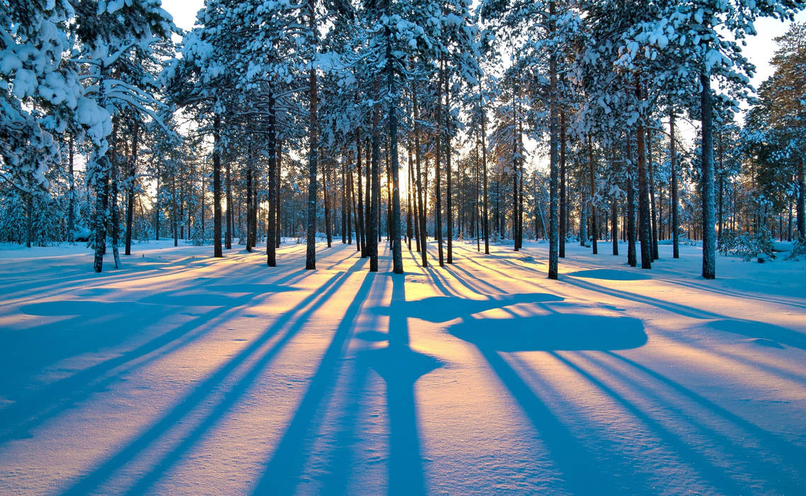 Forest sunrise winter trees