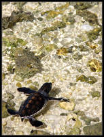 Baby green turtle II by ToytownMafia