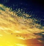 Sky. ..