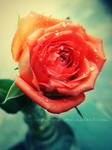 Portrait of a rose. by addy-ack