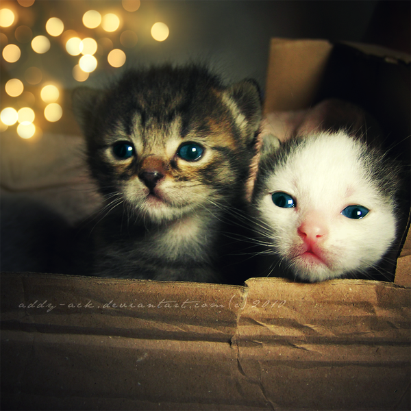 ..Cute cats.. by addy-ack