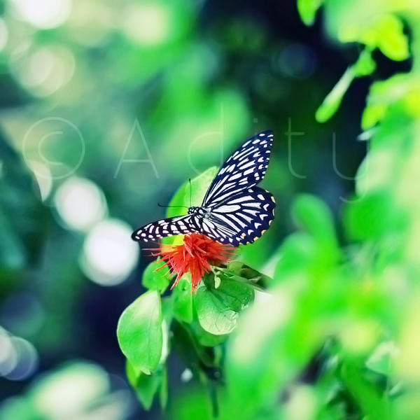 . . Butterfly by addy-ack