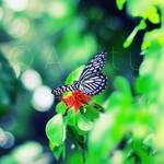 . . Butterfly