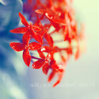 Simply red. .. by addy-ack