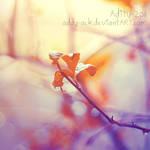 ..Blossom..