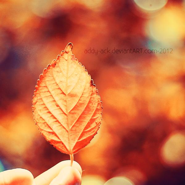 autumn leaf... by addy-ack