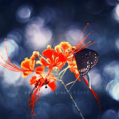 Elegance.. . by addy-ack