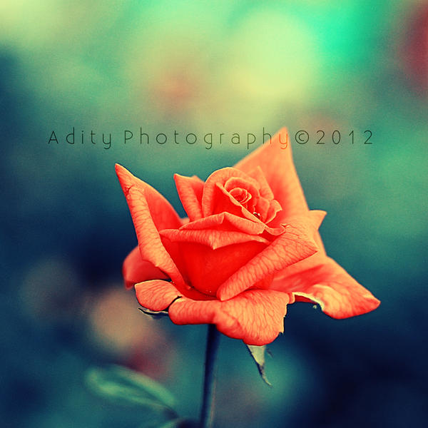bloom... by addy-ack