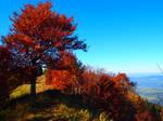 coloured by season
