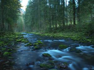 follow the river 1st autumn
