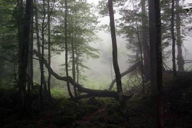 Mystical Forest Background by Burtn