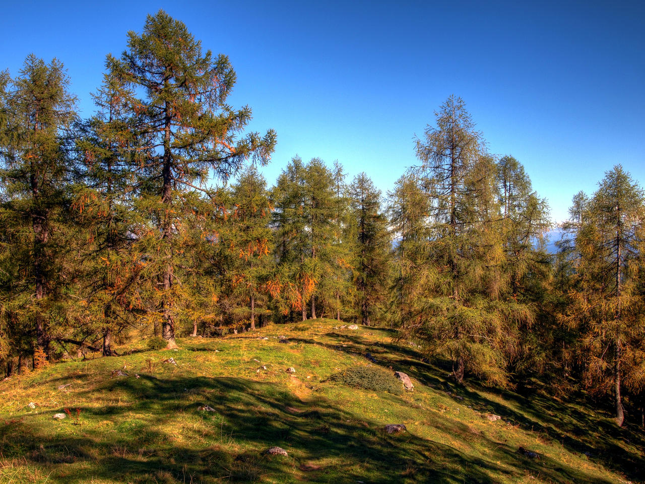 Larchground by Burtn