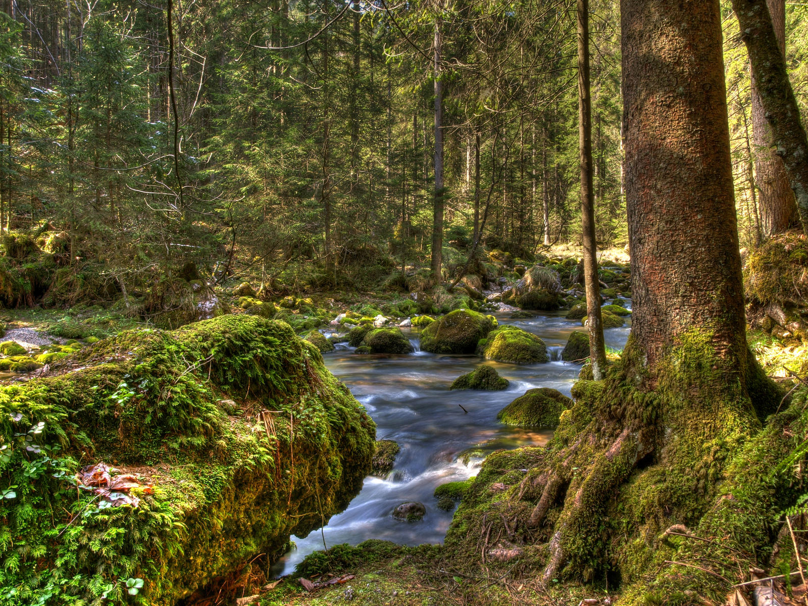 Forest Riverscape by Burtn