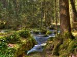 Forest Riverscape