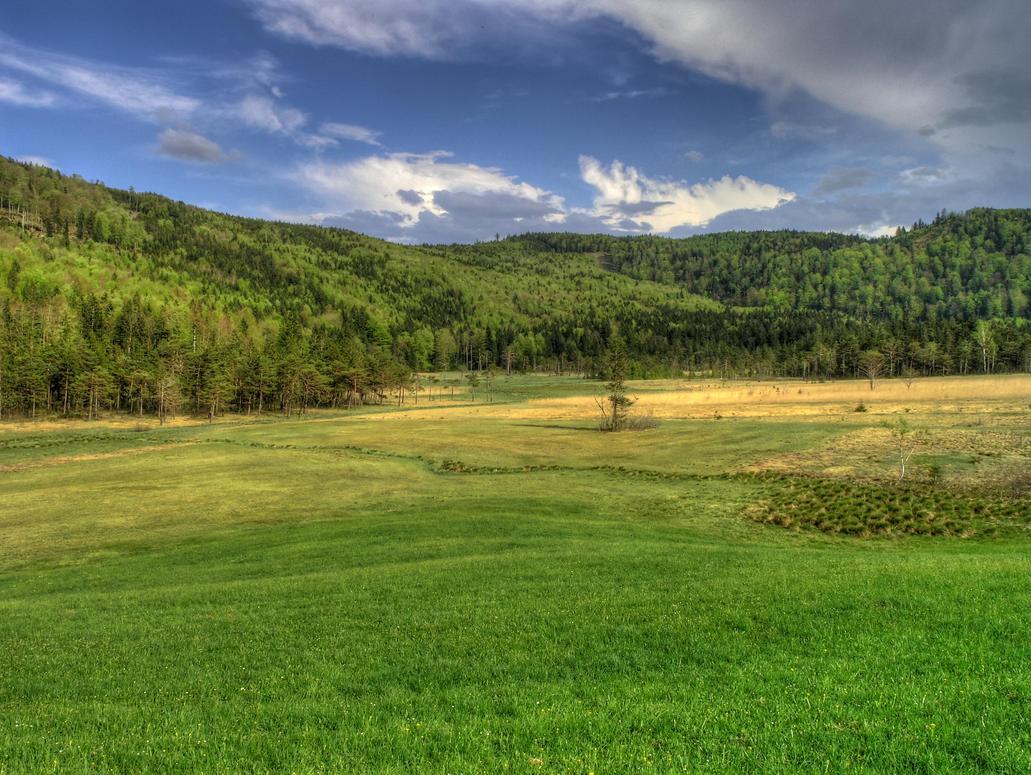 Moorland by Burtn