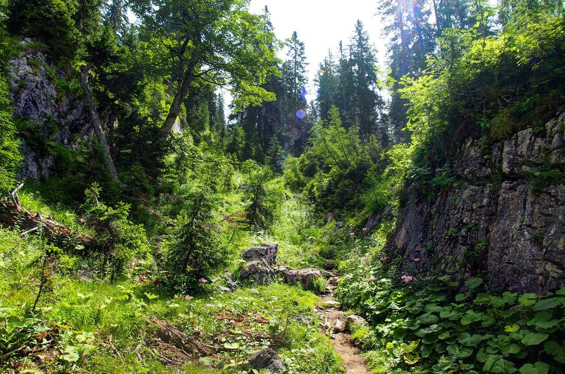 Wilderness Background by Burtn