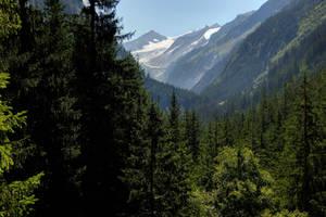 Dark Pines Background by Burtn