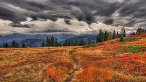 Autumn Approach by Burtn