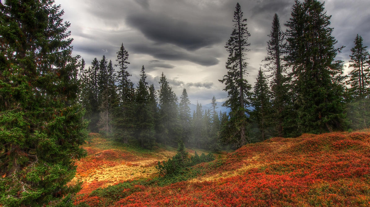 Old Forest Background By Burtn