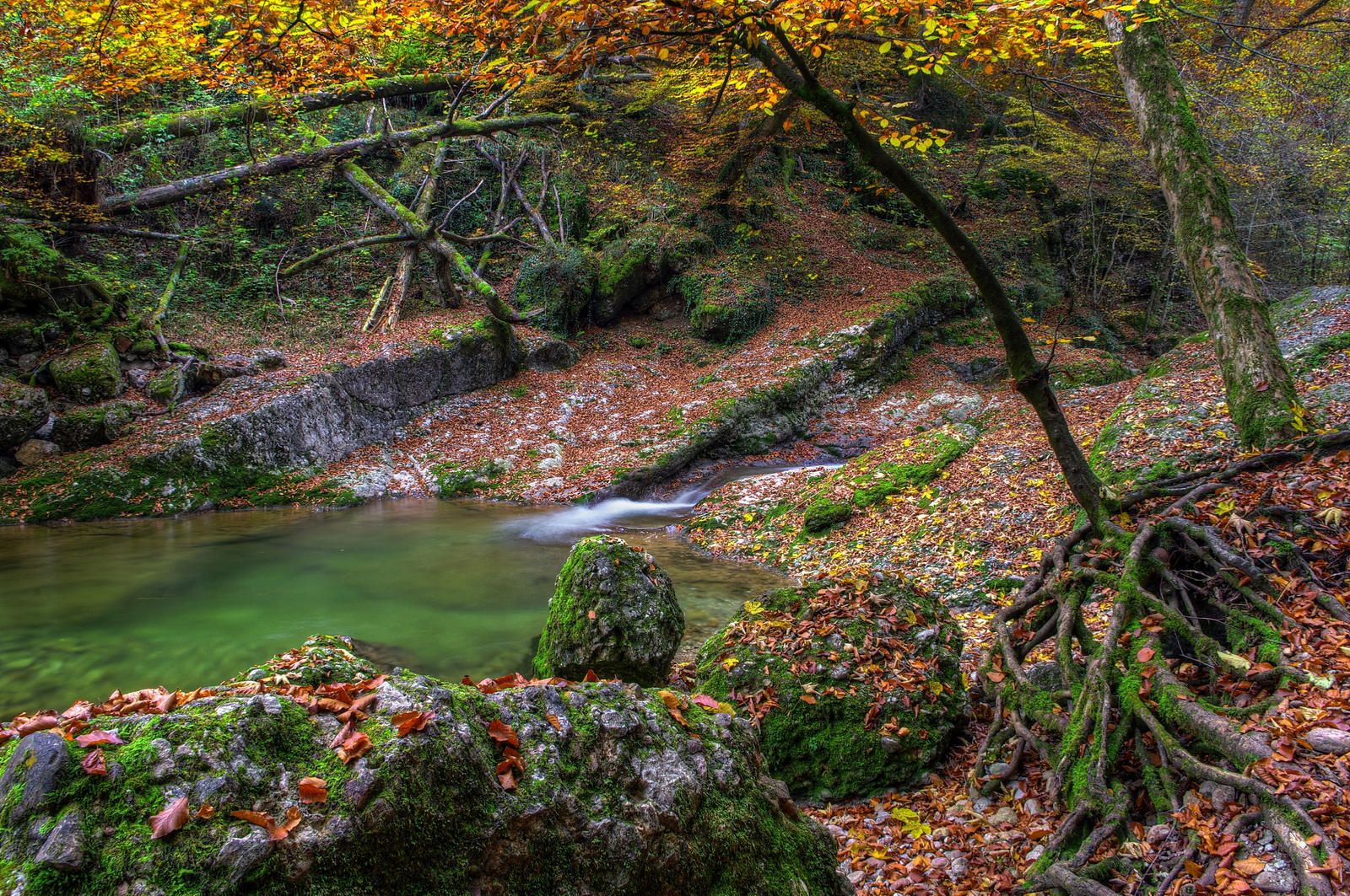 Autumn.* by Burtn