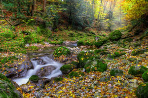 Autumn Forest by Burtn