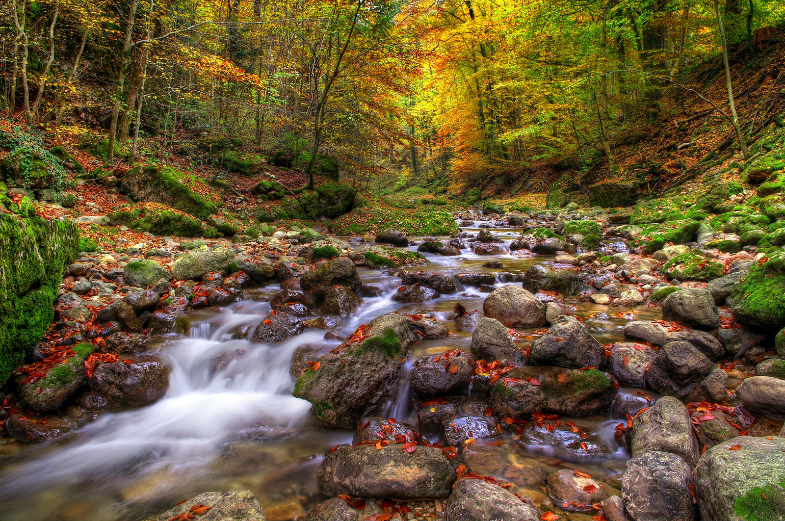Autumn Forest 2nd by Burtn