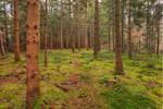 Sunny Forest Background