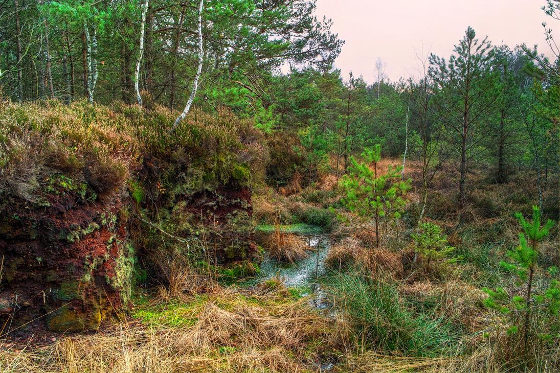 Swamp Of Colour by Burtn