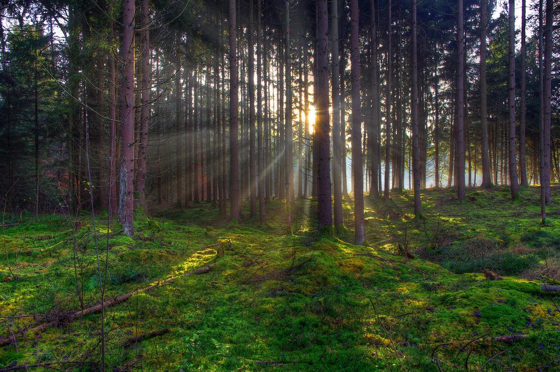 Forest Sunset by Burtn