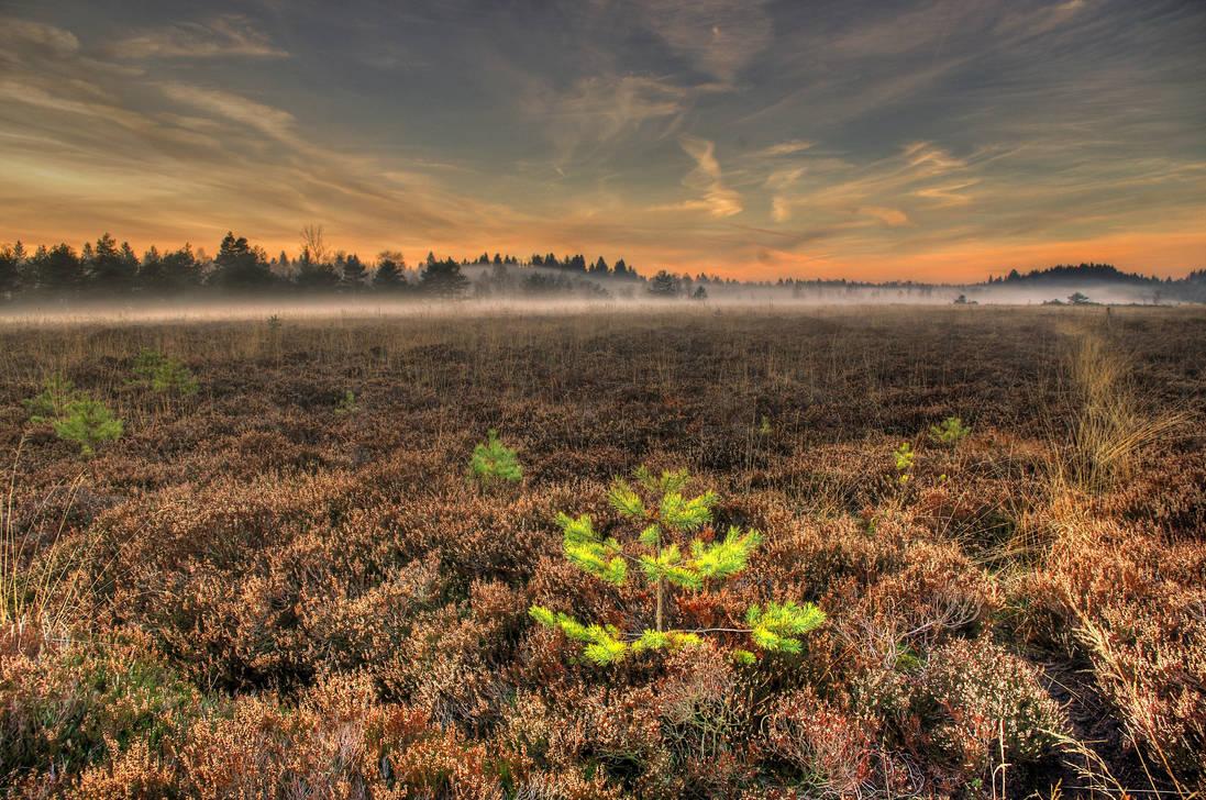 Heidemoor by Burtn
