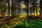 Following The Sunlight