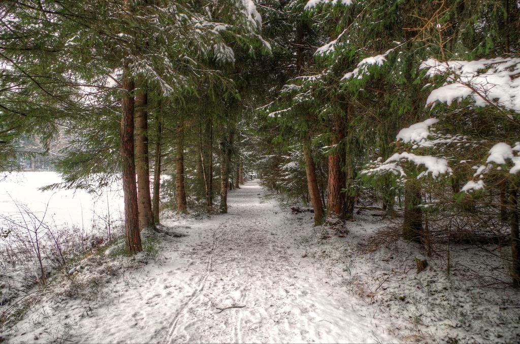 Winter Riding Track by Burtn