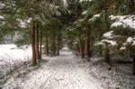 Winter Riding Track
