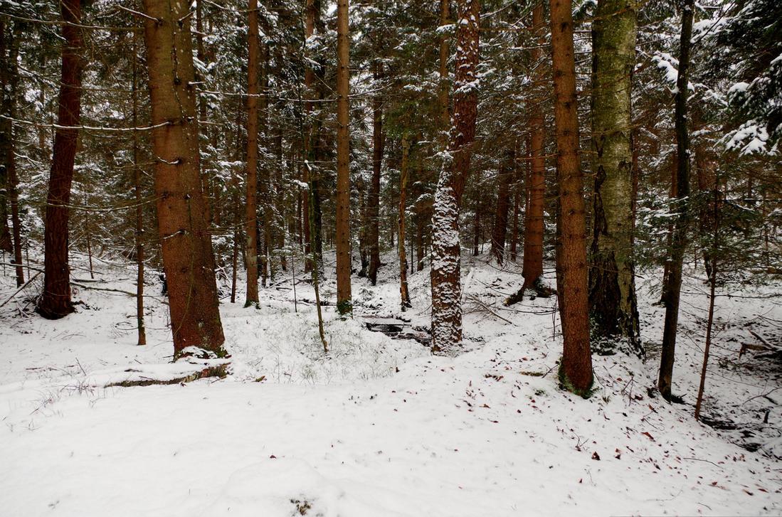 Snowy Forest Background by Burtn
