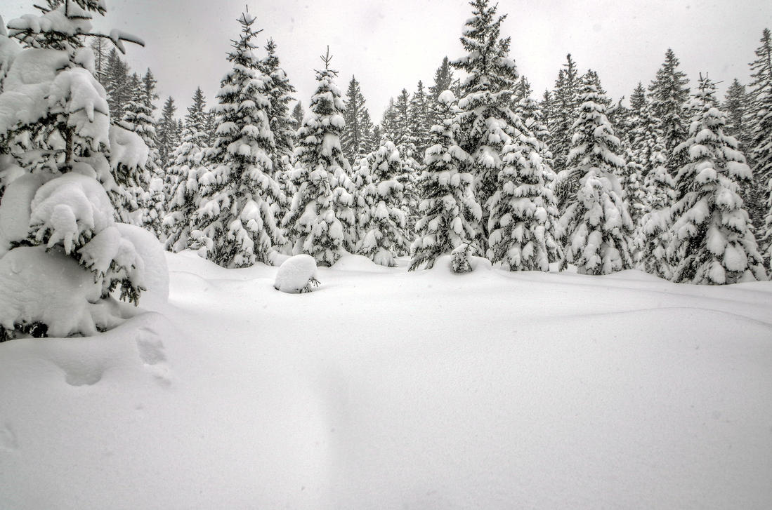 Trees And Snow Background By Burtn ...