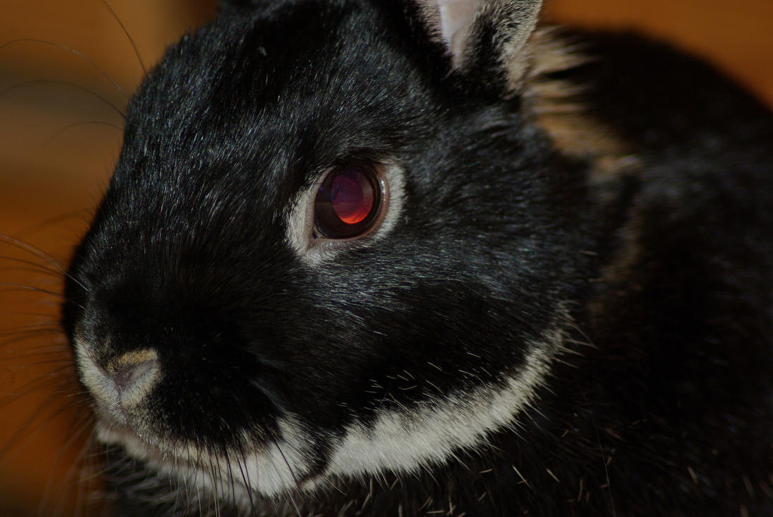 Bunny Creature by Burtn